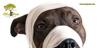 Ya es oficial: «Ley de protección y bienestar animal» entra en vigencia